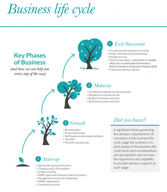 Business Life Cycle Infographic